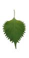 Shiso leaf image