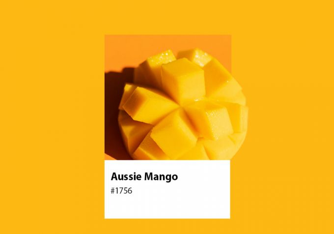 A Short History of Growing Mangoes in Australia image 1