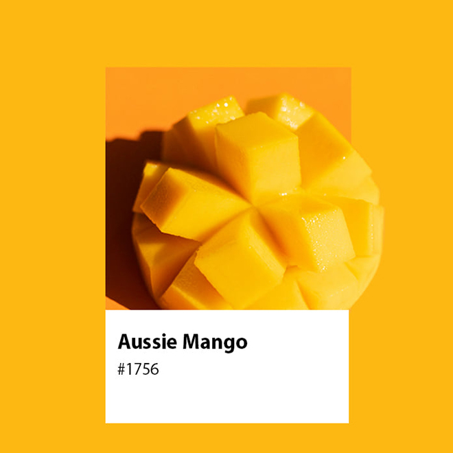 A Short History of Growing Mangoes in Australia image