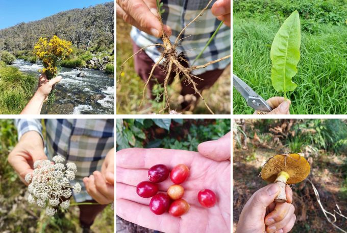 Bartender's Guide to Foraging: Australian Edition image 1
