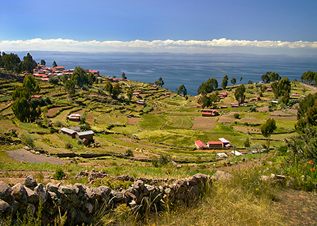 Peruvian pisco image 1