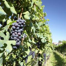 Barolo Chinato wines image