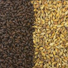 Barley Wine image