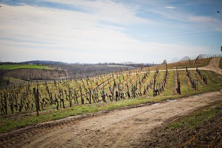 Armagnac Growers, Distillers & Négociants image 1