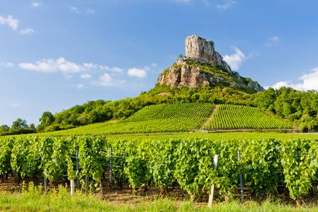 Bourgogne Aligoté image 1