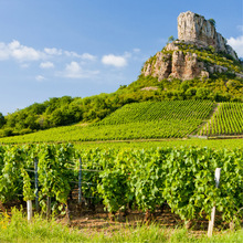 Bourgogne Aligoté image