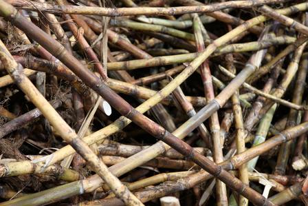 Rum image 1
