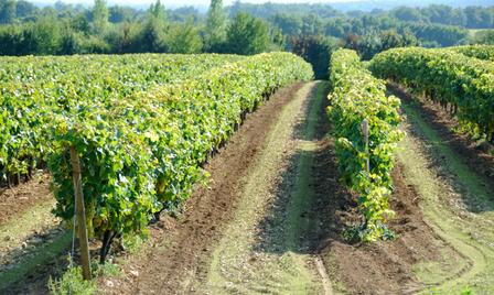 Cognac image 21140