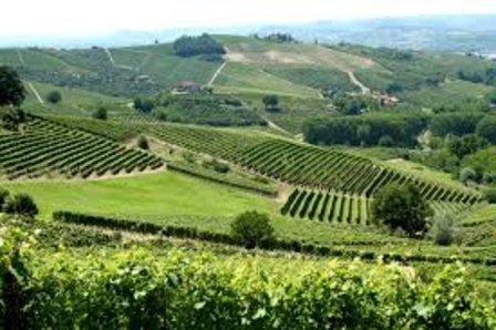 Where does grappa come from and where is it made? image 1