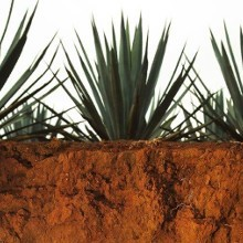 Where does tequila come from? image