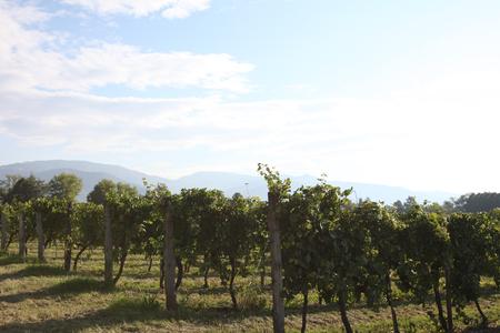 Distillerie Bepi Tosolini image 8