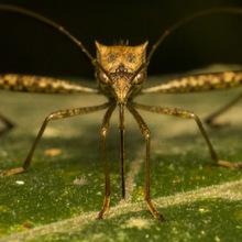 World Mosquito Day image