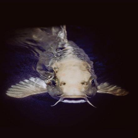 Hoje é Catfish Day