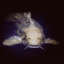 Hoje é Catfish Day image