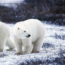 Polar Bear Day image